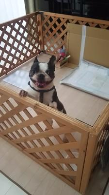 広いラティスのサークル内で笑顔の犬