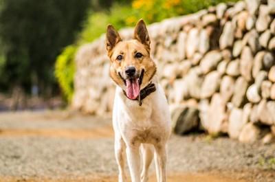道に立つ犬