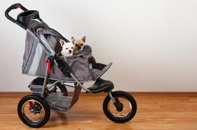 バギーに乗っている子犬2頭