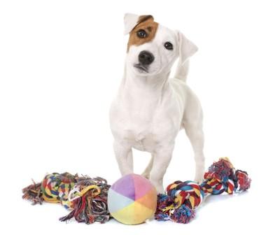 おもちゃと首をかしげる犬