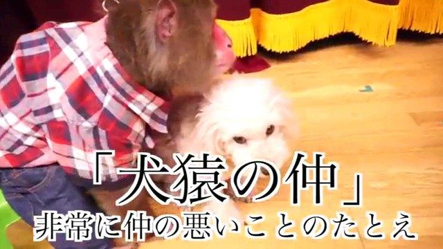 犬猿の仲~字幕