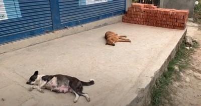 2匹の野良犬
