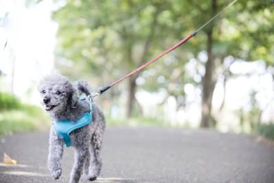 楽しそうに散歩している犬