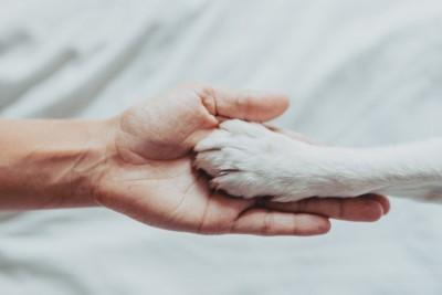 人の手と白い犬の手