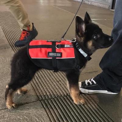 赤いベストを着た子犬