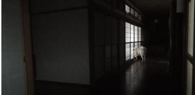 秋田犬ゆうきくんどこかに行くが