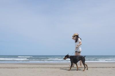 大型犬と散歩する女性