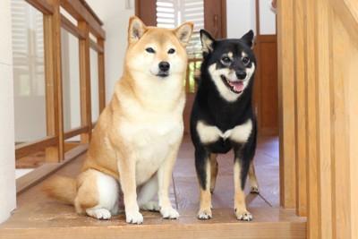 玄関に座る2匹の犬