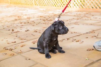 散歩中に立ち止まる子犬
