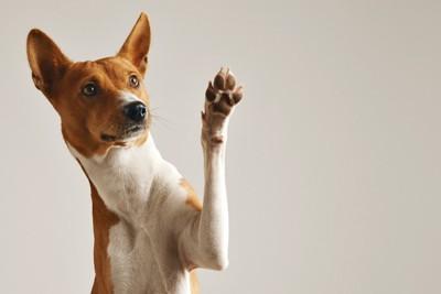 片手をあげている犬