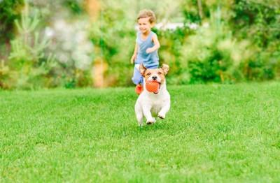 ボールを咥えて芝生を走る犬と子供