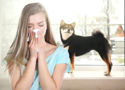 犬の前で鼻をかむ女性