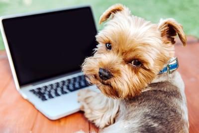 ノートパソコンを開く犬