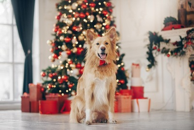クリスマスツリーの前で撮影
