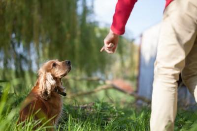 飼い主の指示を見つめる犬