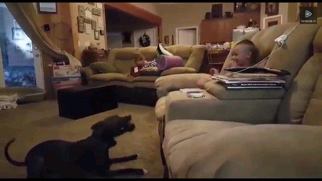 子供を見る犬