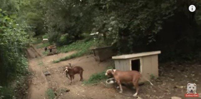点々と連なる犬小屋と鎖につながれた犬たち