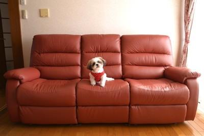 ソファーに座る犬