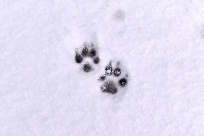 雪についた犬の足跡