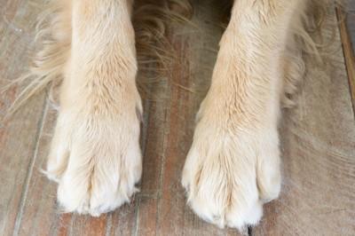 床の上の犬の足アップ