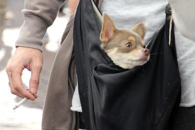 バッグの中から顔を出す犬、タバコを持つ手