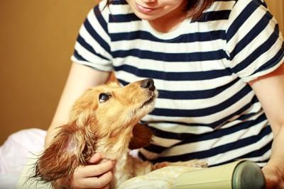 飼い主を見ている犬の写真