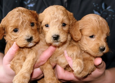 両手に抱えた子犬たち