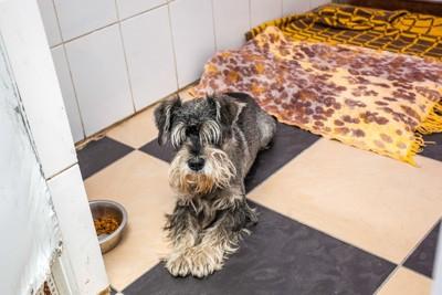 シェルターに預けられた犬
