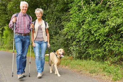 ゴールデンレトリバーと散歩する夫婦