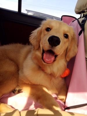車の中の愛犬