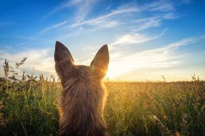 空の景色と犬の後頭部