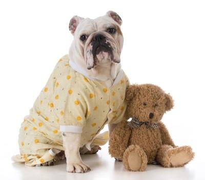パジャマを着たブルドッグ