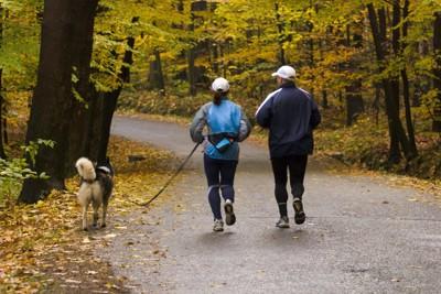犬とジョギングするカップル
