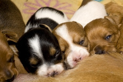 母犬に集まる子犬たち