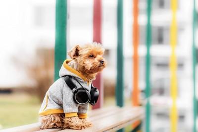 洋服を着てベンチに座る犬