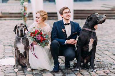 二頭の犬と新郎新婦