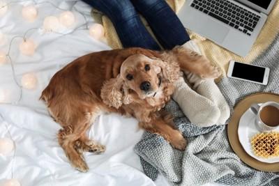人足に手を乗せる犬