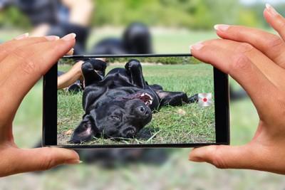 スマホで撮られる犬