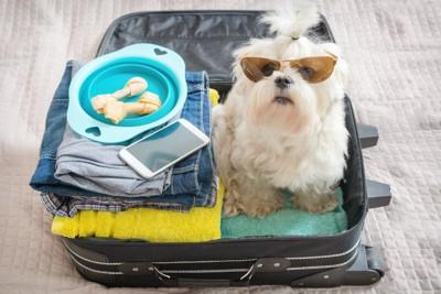 旅行の準備がされたトランクに入った犬