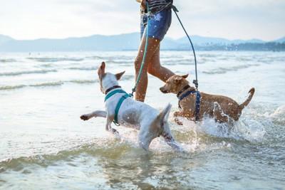 海に向かって走る2頭の犬