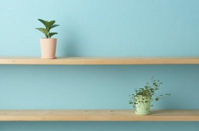 水色の壁の棚に飾られた植物