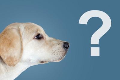 クエスチョンマークと犬の横顔