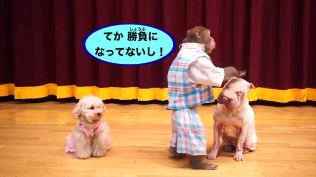 てか~字幕