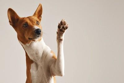 片手をあげて見つめる犬