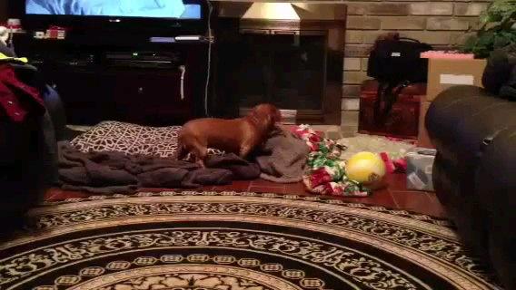 ベッドをみる犬