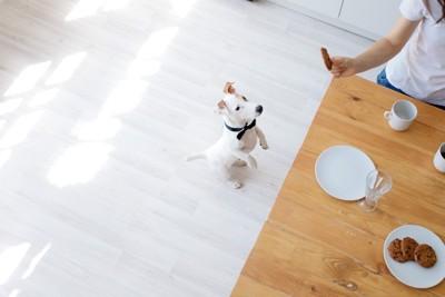 立ってお菓子を覗く犬