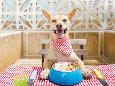 赤チェックのバンダナとランチョンマットで食事する犬