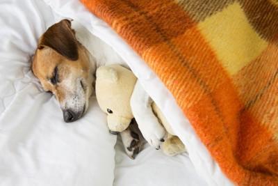 布団で寝ている犬