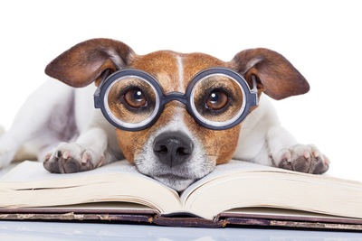 メガネを掛けている犬