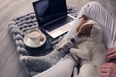 パソコンの前であぐらをかく飼い主の膝の上で眠る犬